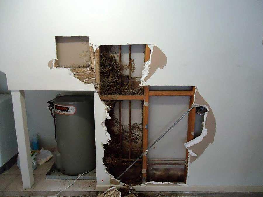 termite damage repair contractor sunshine coast