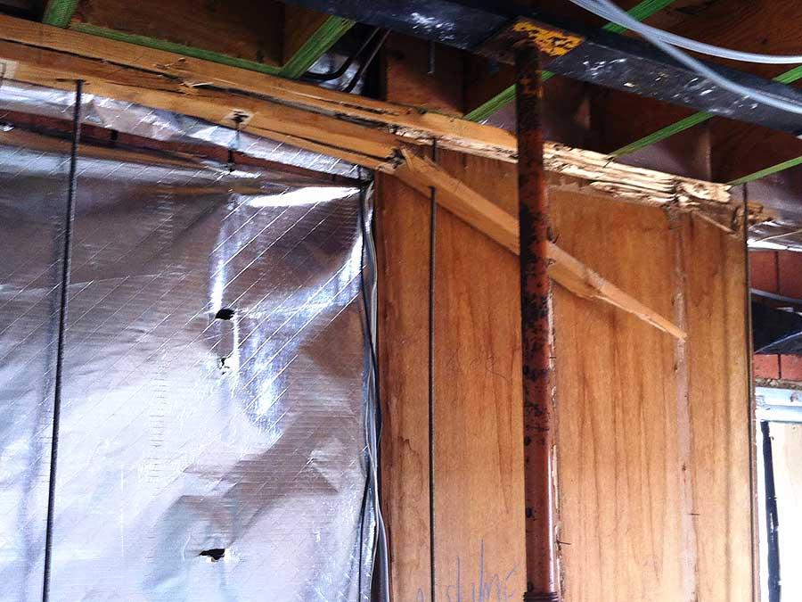 termite repair specialists sunshine coast