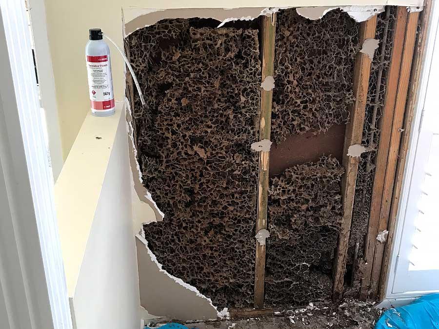 termite damage repairs sunshine coast